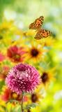 цветок и бабочки в саде на запачканной зеленой предпосылке Стоковое Фото