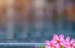 Цветок и бассейн Plumeria Стоковое Изображение RF