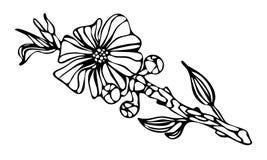 Цветок и бутоны на белой предпосылке Стоковые Изображения