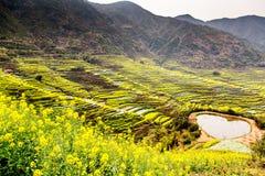 цветок и гора рапса Стоковое Изображение
