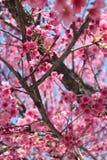 Цветок и деревья Стоковые Изображения