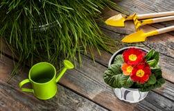Цветок и забота для его Стоковое Изображение