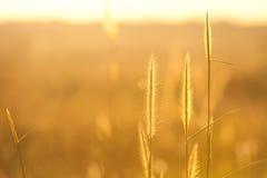 Цветок и заход солнца Стоковые Изображения