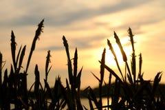 Цветок и заход солнца Стоковое Изображение