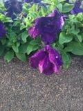 Цветок и зеленый цвет Стоковое Фото