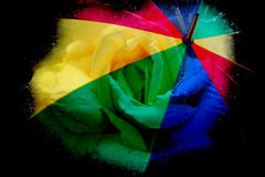 Цветок и зонтик Стоковое Фото