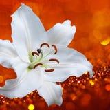 Цветок лилии на красной предпосылке с влияниями bokeh и вода брызгают Стоковая Фотография RF