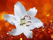Цветок лилии на красной предпосылке с влияниями bokeh Стоковое Фото