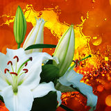 Цветок лилии на красной предпосылке Стоковые Изображения RF