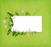 Цветок и листья вьюнка в рамке на зеленой книге Стоковые Фото