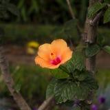 Цветок и листья Стоковое Фото