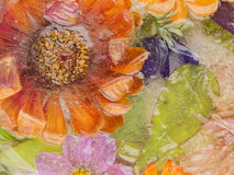 Цветок и лист в льде Стоковое Фото