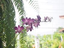 Цветок и кактус Стоковое Фото
