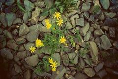 Цветок и камень Стоковая Фотография