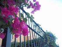 Цветок и металл Стоковые Изображения RF