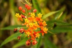 Цветок и насекомые стоковое фото rf