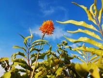 Цветок и небо стоковые фотографии rf