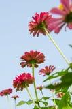 Цветок и небо Стоковые Фото