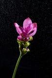 Цветок и дождь Стоковые Изображения RF