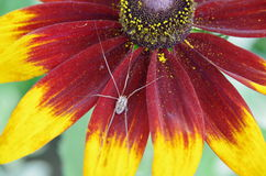 Цветок и паук Стоковые Изображения