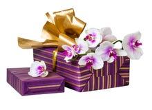 Цветок и подарочная коробка орхидеи Стоковое Изображение