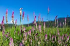 Цветок и поле Стоковые Изображения RF