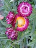 Цветок и пчела стоковое фото