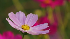 Цветок и пчела акции видеоматериалы