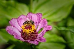 Цветок и пчела стоковое изображение rf