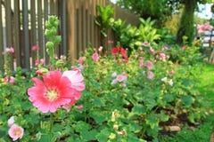 Цветок и сад бесплатная иллюстрация