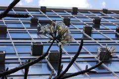 Цветок и современность Стоковые Изображения RF