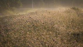 Цветок и солнечность травы Стоковые Фотографии RF