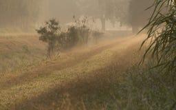 Цветок и солнечность травы Стоковая Фотография