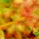 Цветок и трава Стоковое Изображение RF