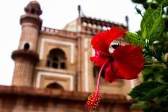 Цветок и усыпальница стоковые изображения