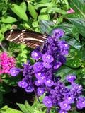 Цветок и фестиваль сада Стоковые Изображения RF