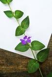 Цветок и чистый лист бумаги Стоковое Изображение RF