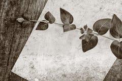 Цветок и чистый лист бумаги Стоковые Изображения