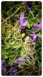 Цветок и шмель Стоковое Изображение RF