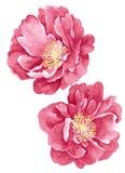 Цветок иллюстрации акварели Стоковое Изображение