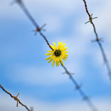 Цветок и barbwire стоковые изображения rf