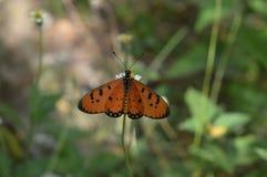 Цветок и butterfly2 Стоковая Фотография RF
