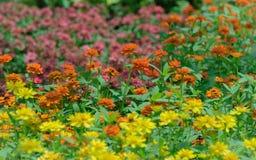 Цветок и colorflu Стоковые Изображения RF
