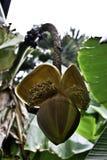 Цветок кактуса закрытый Стоковые Фото