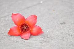 Цветок капка Стоковые Изображения