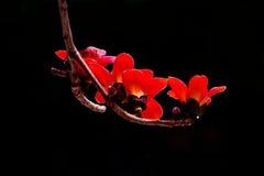 Цветок капка Стоковые Фотографии RF