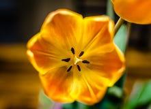 Цветок - кедр Park/TX - США Стоковое Изображение RF