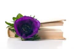 цветок книги ветреницы старый Стоковые Фото