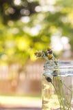 Цветок кнопок пальто в стеклянной бутылке Стоковая Фотография