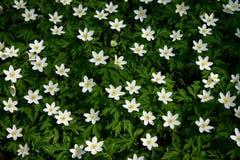 цветок ковра Стоковое Изображение